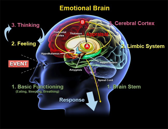 Emotional-Brain