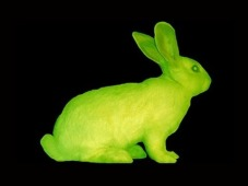 glowing bunny
