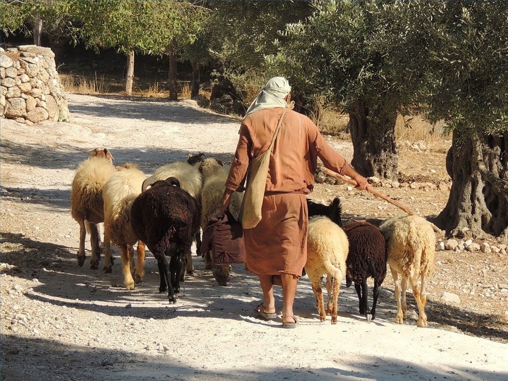 shepherds-sheep